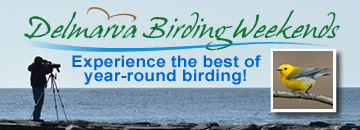 Delmarva Birding Weekends